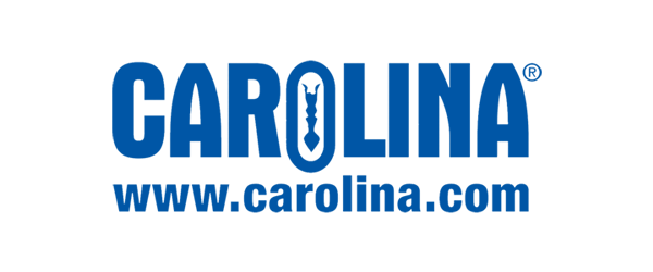 Carolina Logo - Navy blue sans-serif type with living organism in middle of letter O